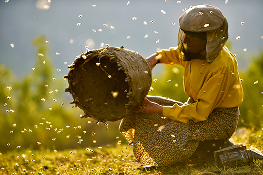 Woman in yellow shirt and brown khakis wearing a beekeeping mask and handling a honeycomb